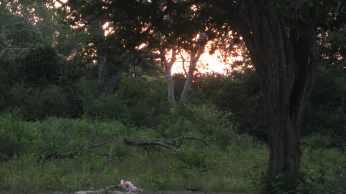 Sun Rise at Udamalale